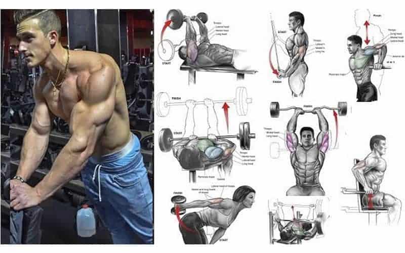 Guia de Ejercicios para los Triceps
