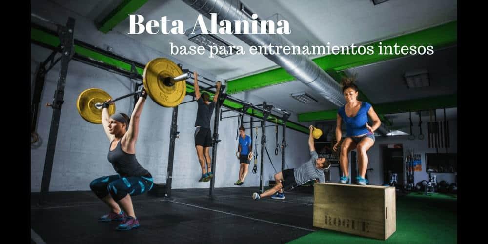 Beta Alanina – La base del entrenamiento intenso de los atletas