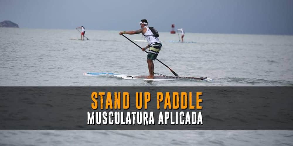 Paddle:  Musculatura Aplicada y Estiramientos