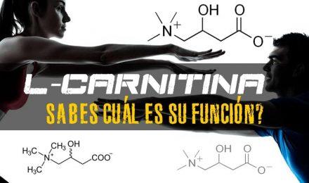 L-Carnitina – Su Función en el cuerpo y la suplementación