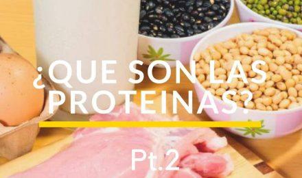 Que es la proteína,  y cuales son sus funciones Parte 2