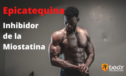 Epicatequina del chocolate negro – ¿Inhibidor de la Miostatina?