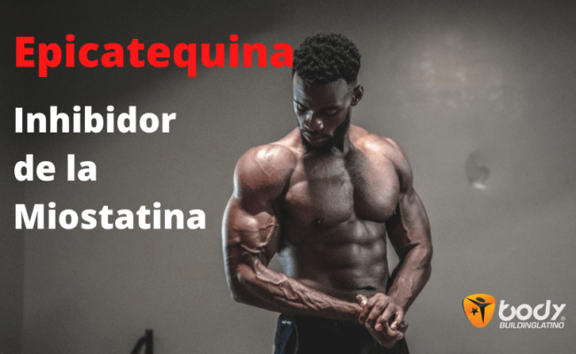 Epicatequina del chocolate negro - ¿Inhibidor de la Miostatina?